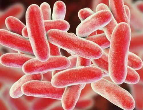 With nanosept against multidrug-resistant bacteria