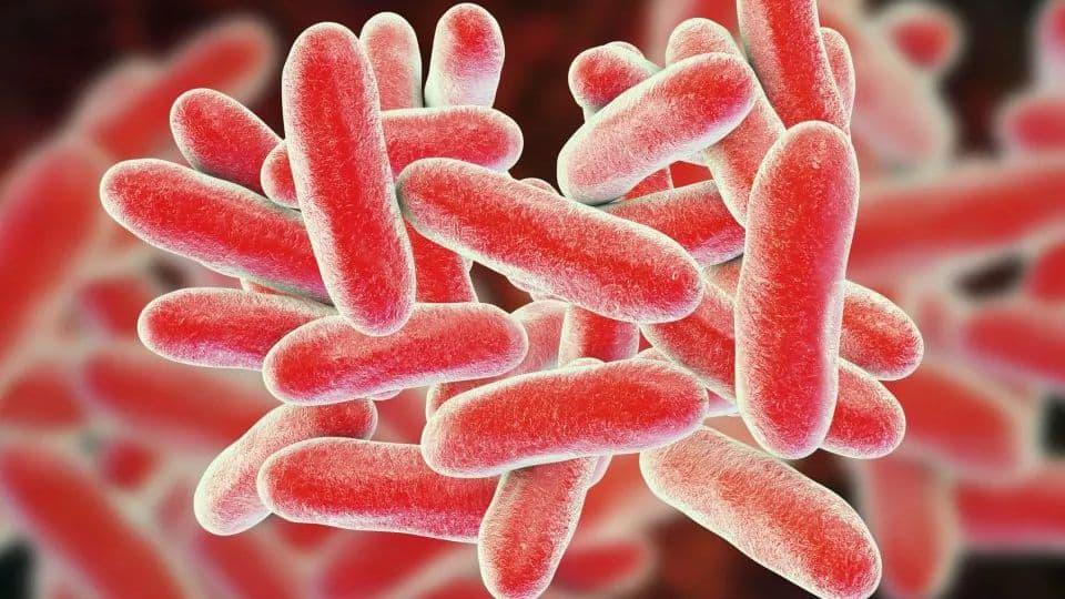 Szuperbaktérium